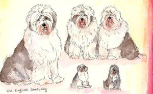 Old English Sheepdog by ThePyf