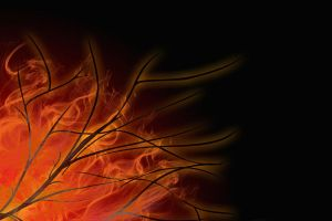 Burning Branches by crazymonkey82394