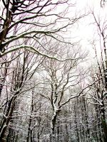 WinterTrees by Ruby125