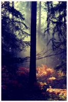 Wald by BrickstonePictures