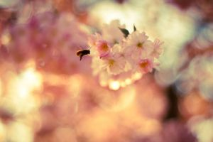 Spring comes, even in germany by dulcechokolate