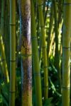 Bamboo by thegreenmanalishi