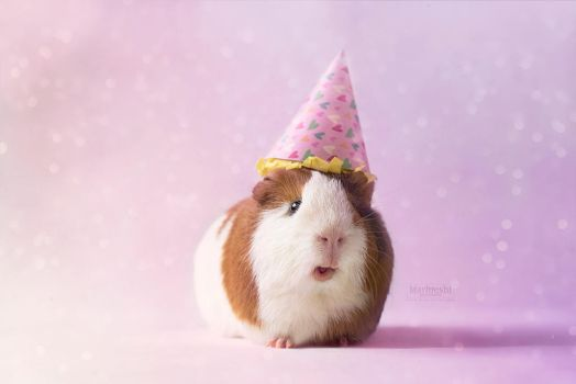 Party Piggy! by Marloeshi