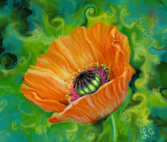 Digital Colored Poppy Old Photo by thepurpleorchid1
