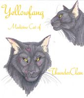 Yellowfang Faces by MudstarMord-Sith