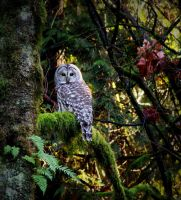Color owl... by GreatExposure