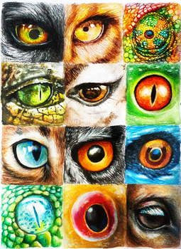 Animal Eyes by Cortoony