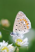Butterfly on the flower by luka567