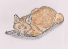 Fox kit in color pencils by ArcticIceWolf