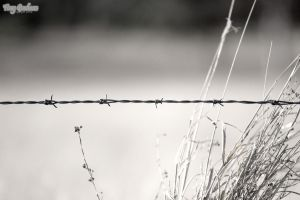 Barbed Wire 3 Mono by droy333