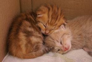 Sleeping kittens by Yorleen