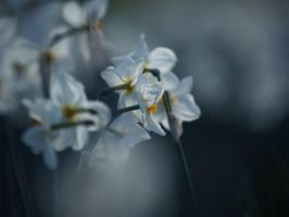 Narcisses by valeriemonthuit