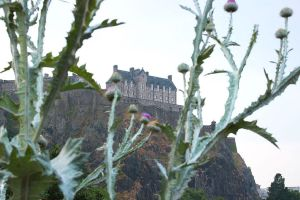 Thistles - The Symbol of Scotland by AgiVega