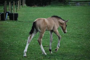 Foal Stock 10 by equinestudios