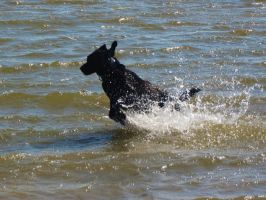 Dog Stock 3 by Tocama-Stock