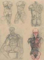 Anatomical Study 1-4 by Cool-Clothes