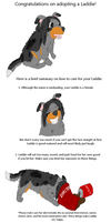 guide to Laddie care by Colliequest