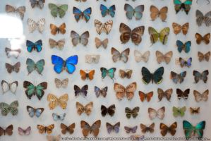 Butterflies : 22 by taeliac-stock