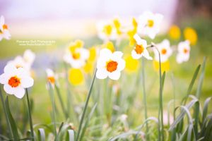 Colourful Spring - Day 75 by rosannabell