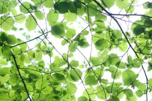 Roof of Leaves by AndySimmons