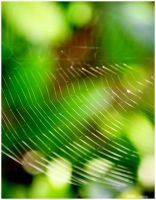 what a tangled web we weave by devilicious
