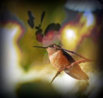 Female Rufous Hummingbird Squa by houstonryan