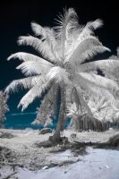 Infrared Palm by Tschisi