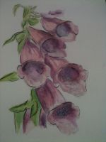 Foxgloves by FabLewis