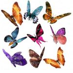 Butterfly Stock 3 by Shoofly-Stock