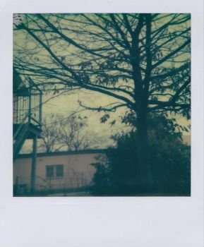 I want leaves on that tree by Fleischparade