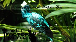 Wallpaper - Spangled Cotinga by WillFactorMedia