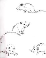 ...the rats... by HoLLyp0p