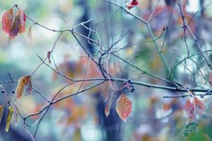 these autumn leaves by LuizaLazar