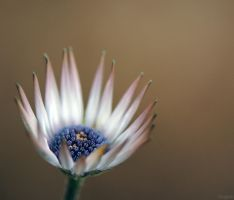 Flowers. by Tooga