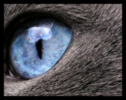 A Cat's Eye View by switchbladecry