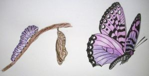 Butterfly by terenika