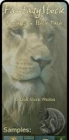 Lion Stock Zip Pack by FantasyStock