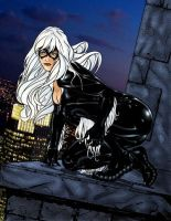 Black Cat 1 by hawk5