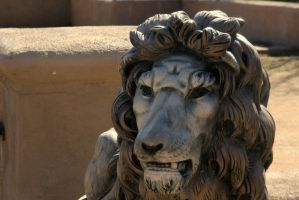 Lion by surferpete