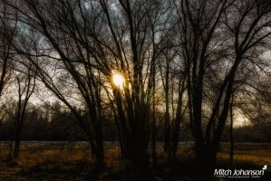 Star Sun Through the Trees by mjohanson