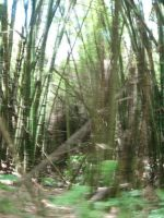 Bamboo blur by NellieVance