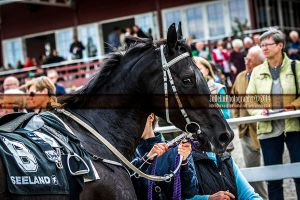 Horse Racing 453 by JullelinPhotography