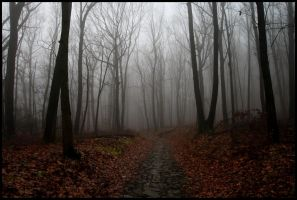 Ghostly Woods of Mt Penn by raistlin306