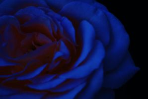 Blue Rose by SheDevilGoddess