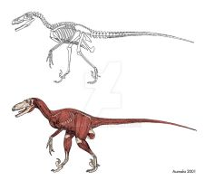Dromaeosaur bones and muscles by Osmatar