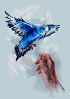 Budgie Sketch by ElConsigliere
