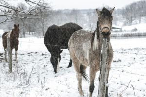 A Horse In January by UriahGallery