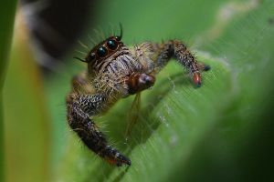Hungry Spider by sasonian37