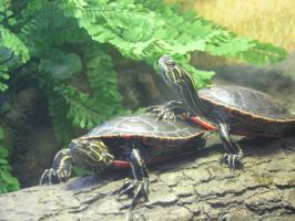 Turtles 002 stock by thiselectricheart