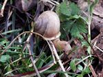 Snail's Pace by PixiePoxPhotography